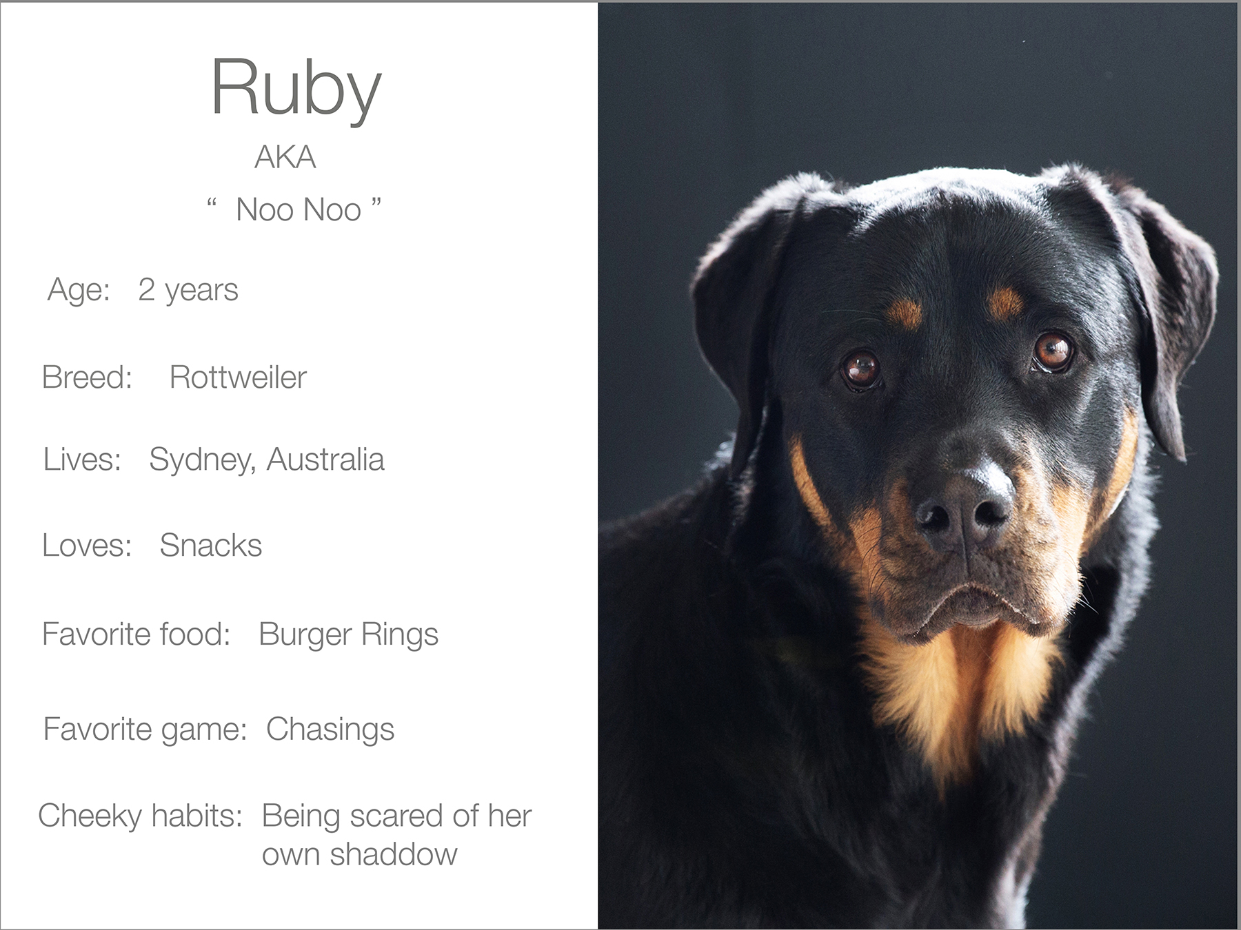 Ruby profile dogs_and_the_city kristie_lee_photographer