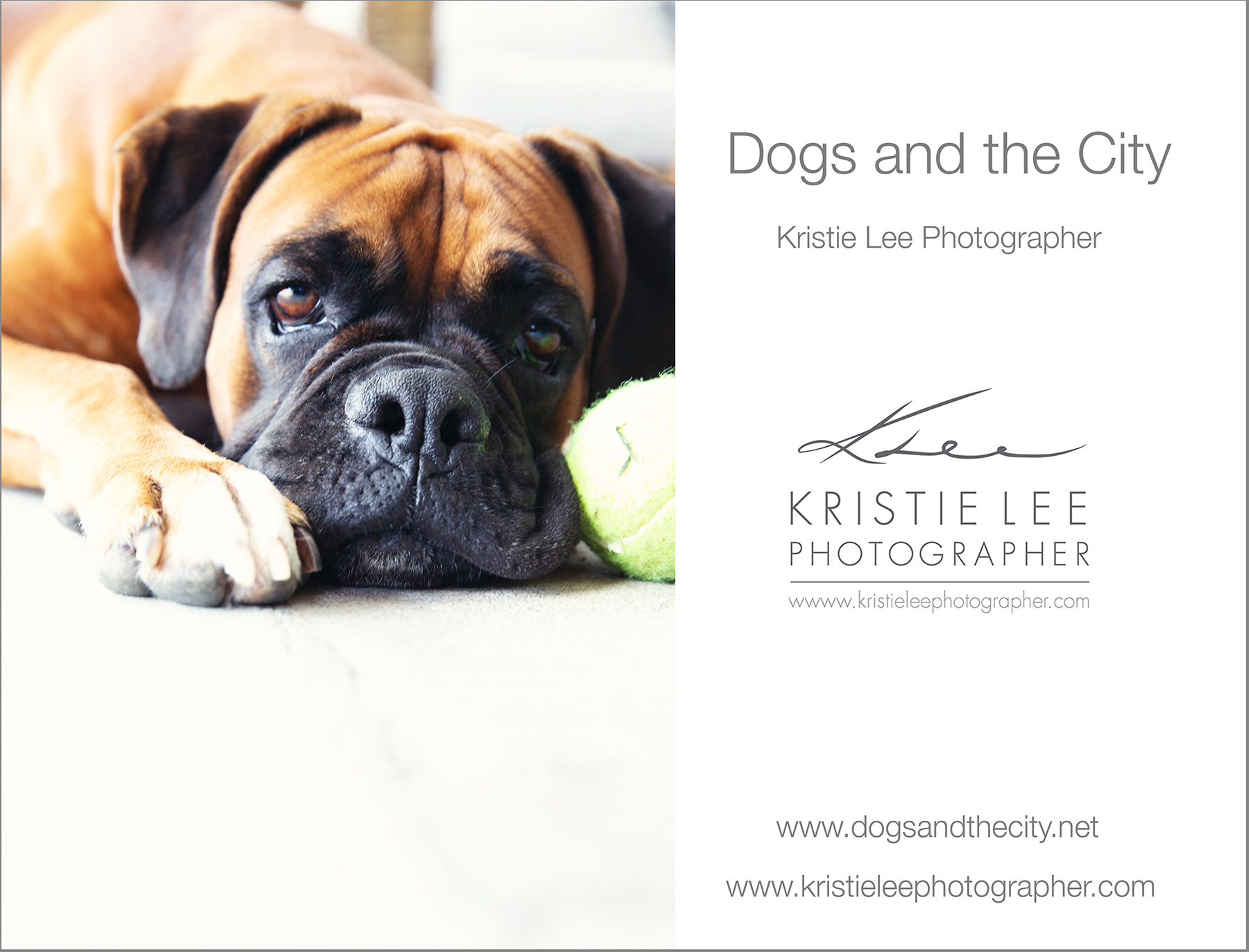 Nixon dogs_and_the_city kristie_lee_photographer