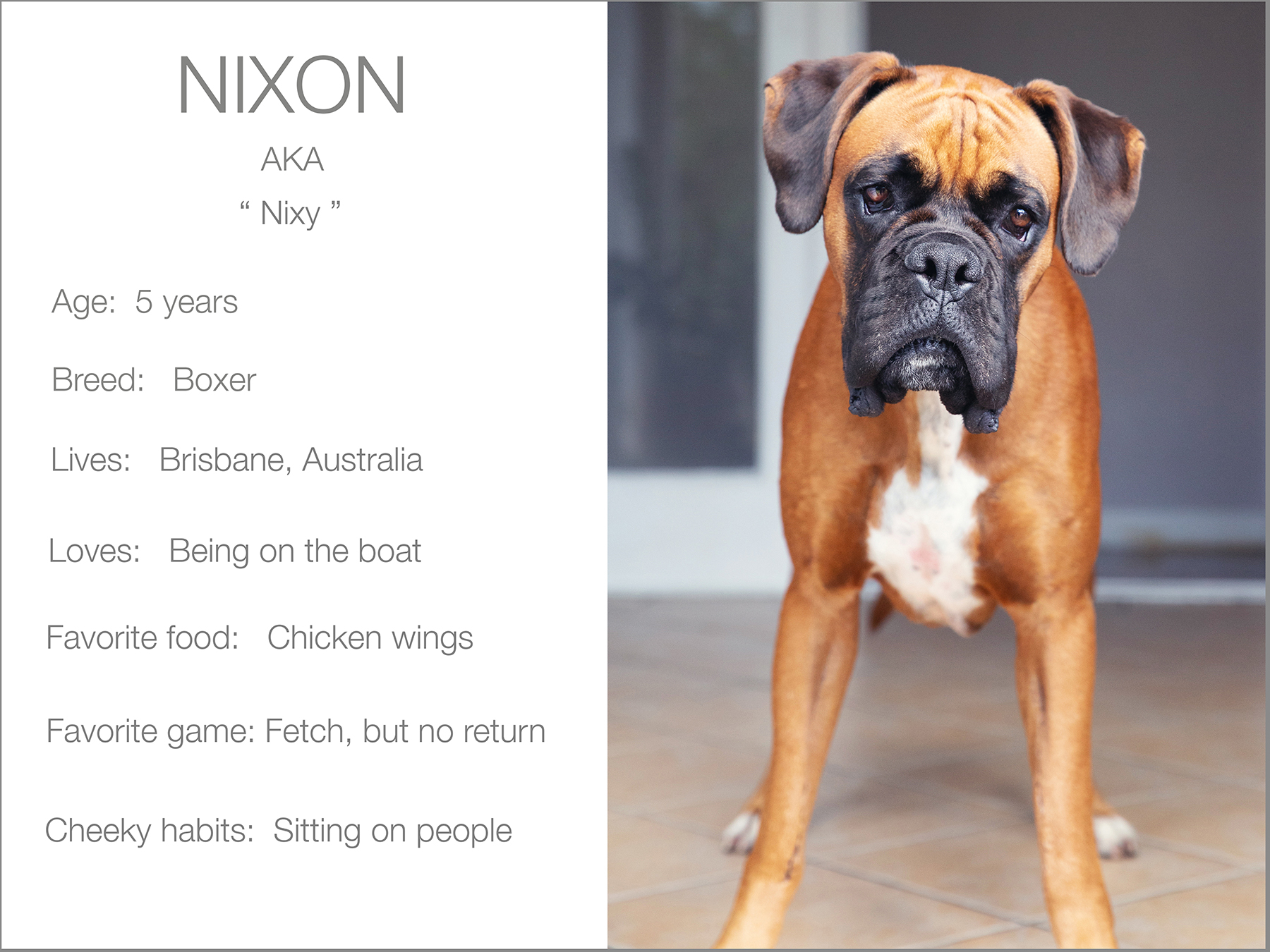 Nixon profile dogs_and_the_city kristie_lee_photographer Charlie.jpg
