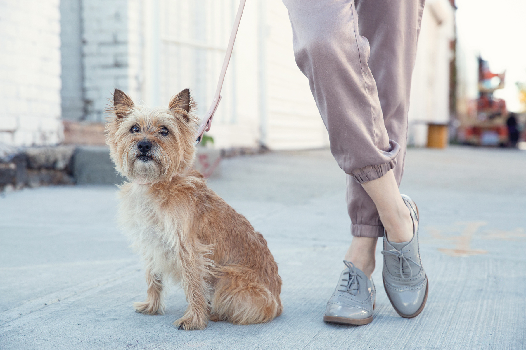 O04A3164 Clover kristie_lee_photographer copy