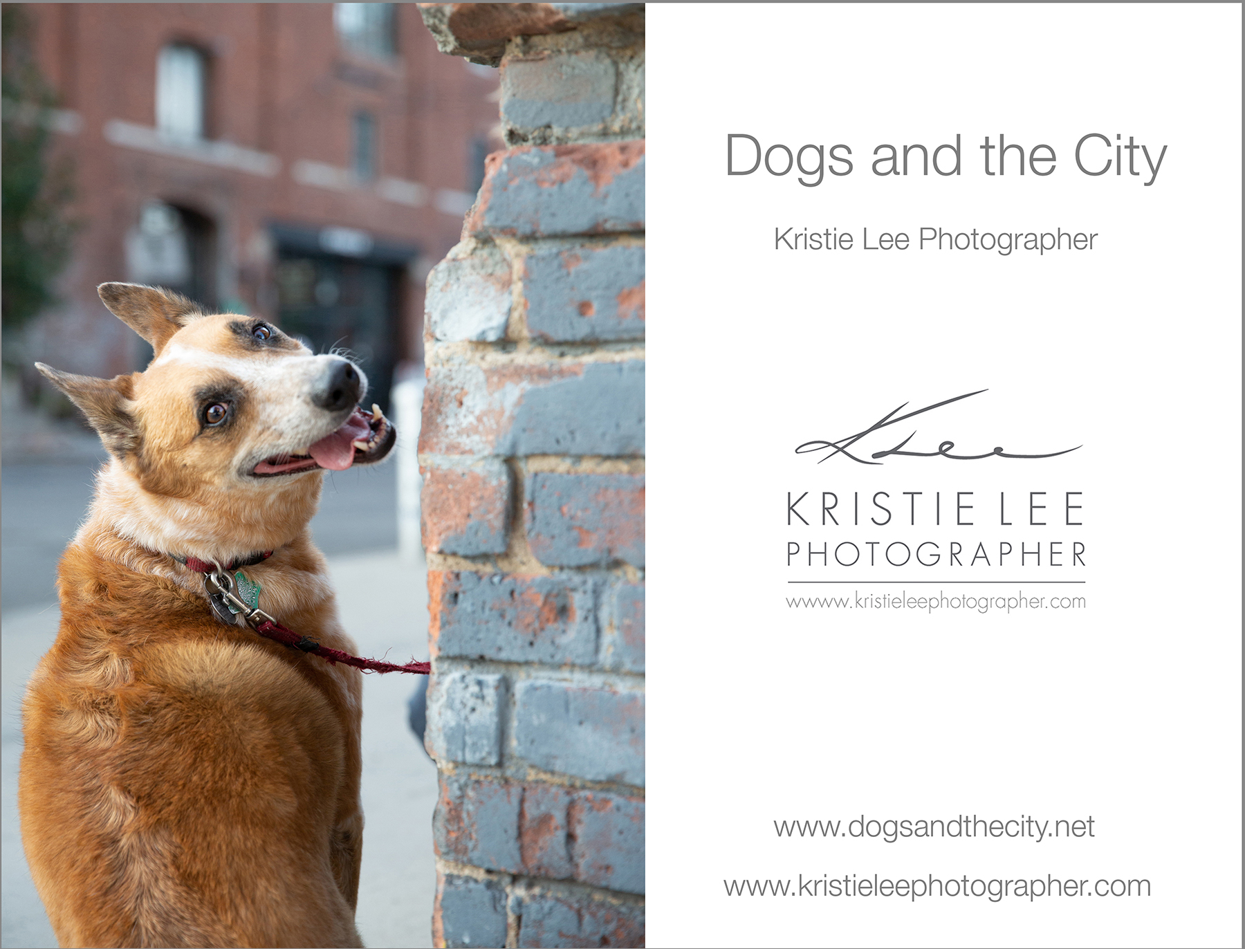 Yolanda dogs_and_the_city kristie_lee_photographer