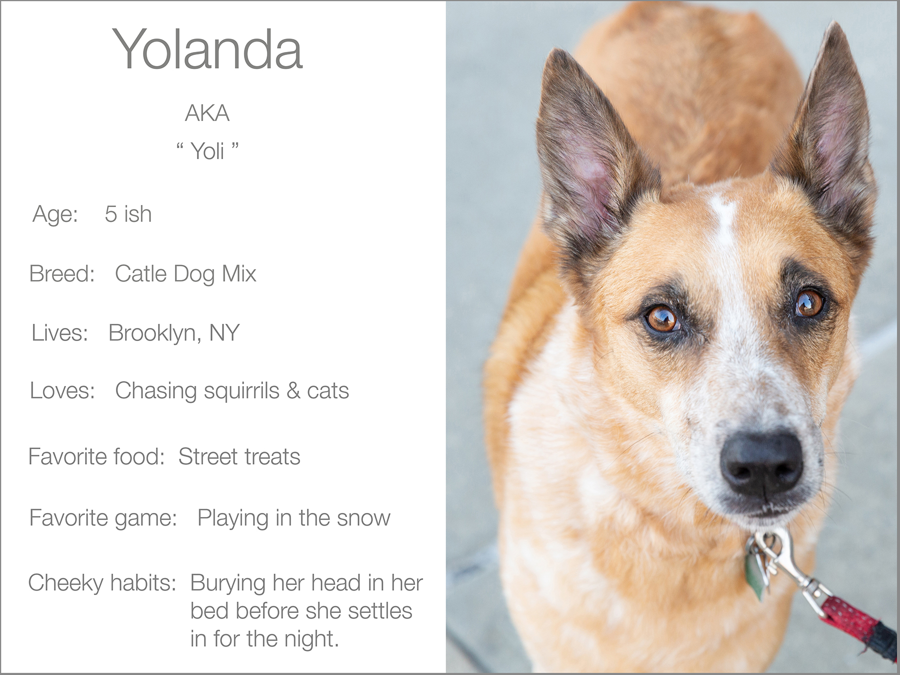 Yolanda profile dogs_and_the_city kristie_lee_photographer Charlie.jpg 2